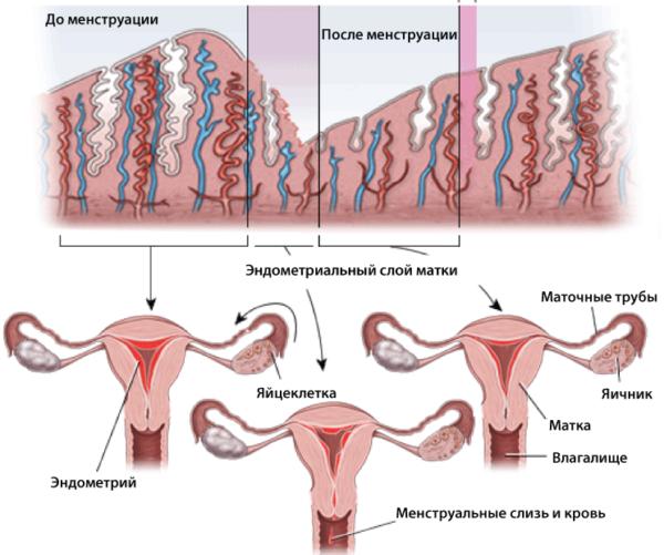 lrosa utflod rosa utflod gravid