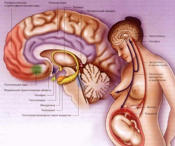 Пролактин прогестерон