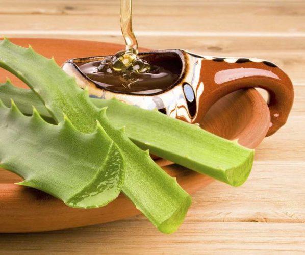 Алоэ – полезные свойства и применение алоэ, сок алоэ, рецепты алоэ, алоэ с мёдом, экстракт алоэ. Алоэ древовидное, домашнее