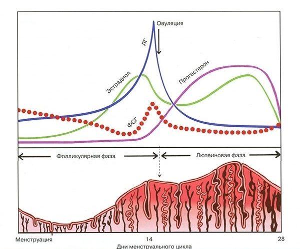 Прогестерон лютеиновая фаза