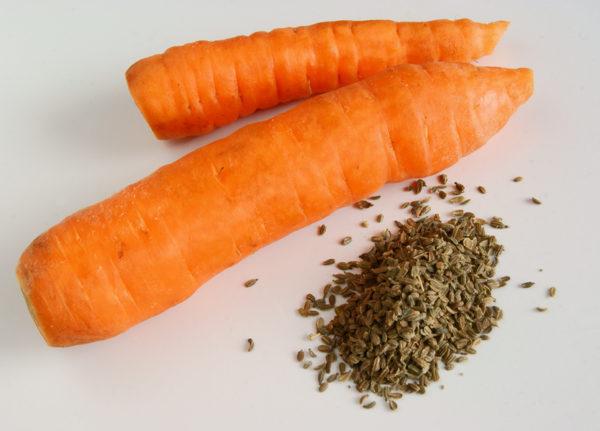 семена огородной и дикой моркови
