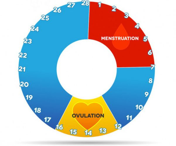 Месячные цикл